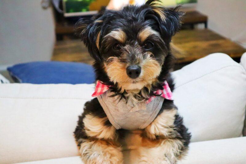 襟つきの服を着た犬