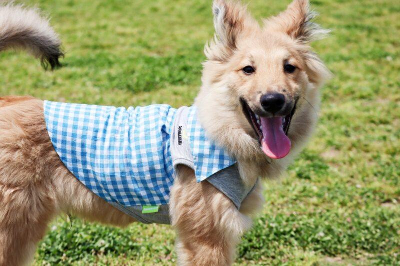チェック柄の服を着た犬