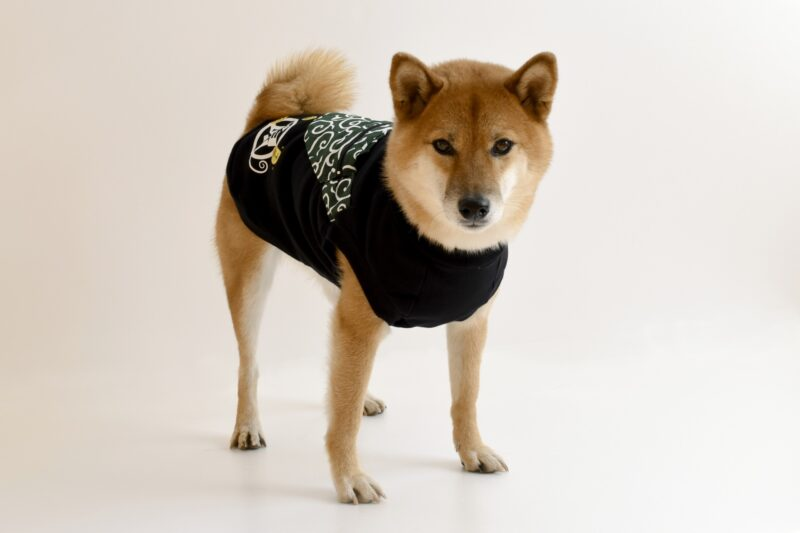 唐草模様の服を着た犬